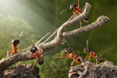 Ameisen lassen sich gezielt bekämpfen.