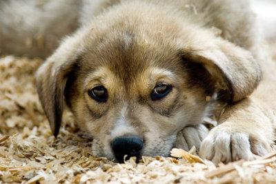 Der Schutzvertrag ist wichtig für Herrchen und Tier.