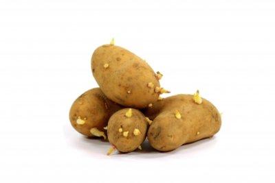 Sprossknollen vermehren sich bei den Kartoffeln.