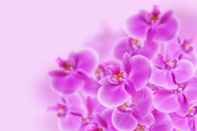 Orchideen eignen sich als Tattoo-Motiv.