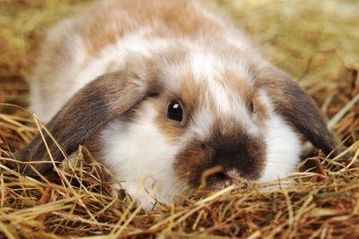 Gesundes Futter für Kaninchen.