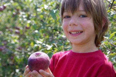 Schöne rote Apfelbäckchen ernten