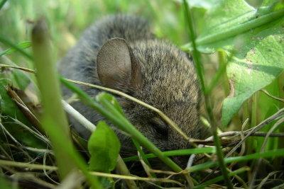 Mäusebabys brauchen ein warmes Nest.