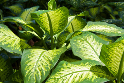 Durch Bewässerungskugeln sind Ihre Pflanzen immer versorgt.