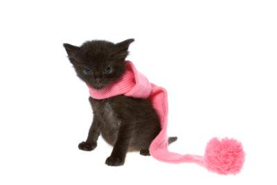 Halswickel helfen Katzen bei Heiserkeit.