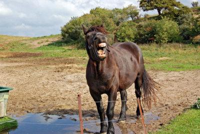Man sollte Pferde verstehen.
