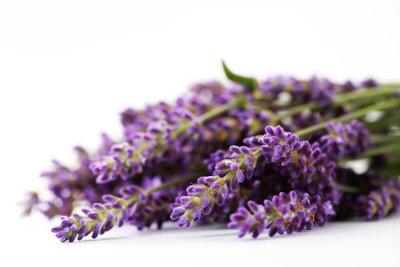 Lavendelöl nimmt den Juckreiz bei Sonnenbrand.