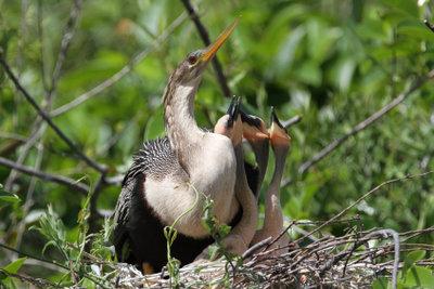 Auch Vogelkinder schreien, wenn sie Hunger haben.