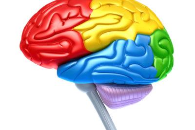 Kognitiv heißt verstandesmäßig.