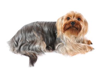 Wenn Ihr Hund oft zittert, handeln Sie entsprechend, damit es Ihrem Vierbeiner bald wieder gut geht.