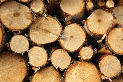 Frisches Holz aus dem Wald.