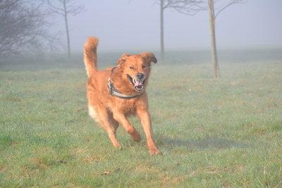 Wenn der Hund weggelaufen ist, ist die Sorge um ihn groß.