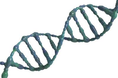 Filialgeneration ist ein Begriff aus der Genetik.