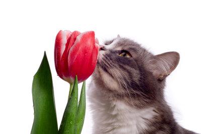 Blütenstaub kann eine Pollenallergie auslösen.
