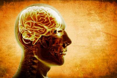 Kognitive Prozesse finden im Gehirn statt.