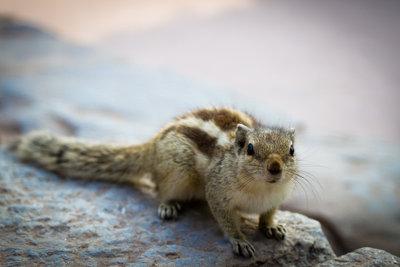 Streifenhörnchen - kleines Tier braucht viel Platz.