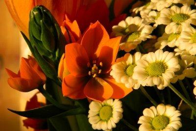 Der Gärtnertod - eine ausdauernd blühende Pflanze