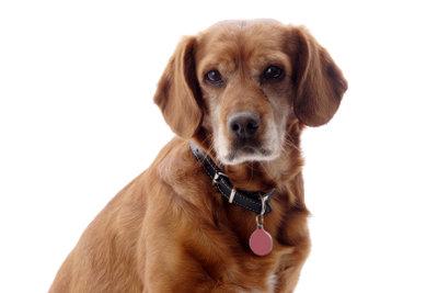 Ein Schlaganfall kann jeden Hund treffen.