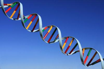 Die Verpackungsform der DNA