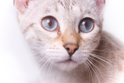 Eine nervöse und ängstliche Katze
