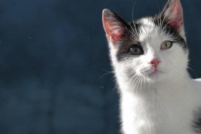 Katzen sind sensible und saubere Tiere.