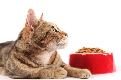 Hochdosiertes Futter für die Katze