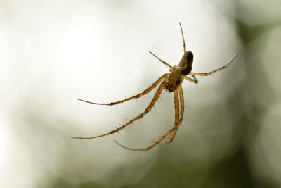 Achtung vor giftigen Spinnen.