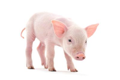 Gehen Sie an Fasching als Schweinchen.