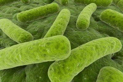 Bakterien pflanzen sich selbstständig fort.