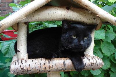 Im Spiel können Katzen andere Kleintiere fangen.