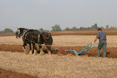 Der Verismus befasste sich auch mit dem Leben von Bauern.