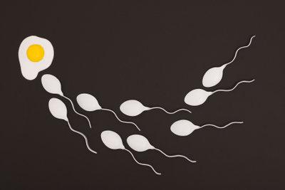 Spermien haben eine individuelle Lebenszeit.