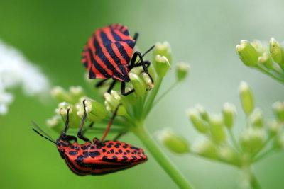 Raus mit den Käfern und Wanzen.