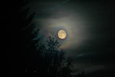 Werwolf und Vampir gleichzeitig ist unmöglich.
