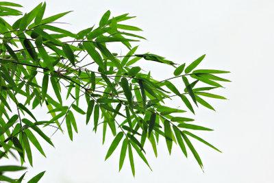 Bambus sollte im Winter geschützt werden.