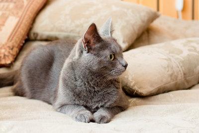 Im Bett fühlt sich die Katze wohl.