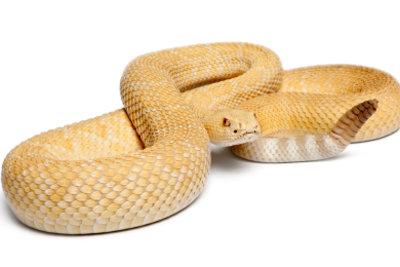 Albinismus kommt auch im Tierreich vor.