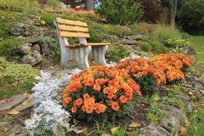 Chrysanthemen lassen sich leicht überwintern.