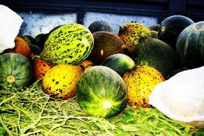 Wassermelonen sehen sehr vielfältig aus.