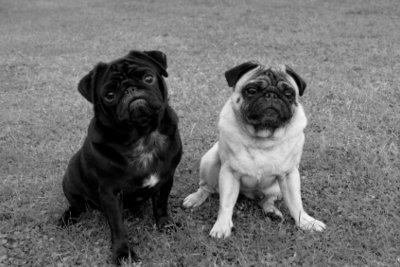 Die Hundesteuer kann absetzbar sein.