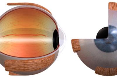 Das Auge in 3D