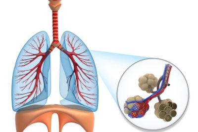 Nahaufnahme der bei der Atmung wesentlich beteiligten Lungenbläschen