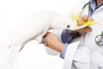 Ein Praktikum beim Tierarzt ermöglicht spannende Einblicke.