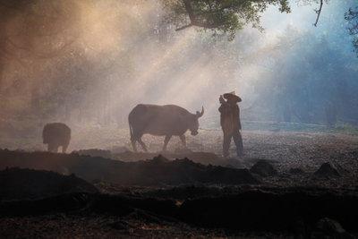 Die Landwirtschaft ist weltweit wichtig für die Ernährung der Bevölkerung.