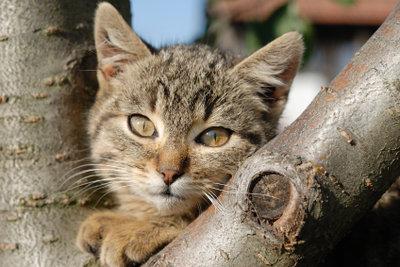 Katzen erleben viel auf Freigängen.