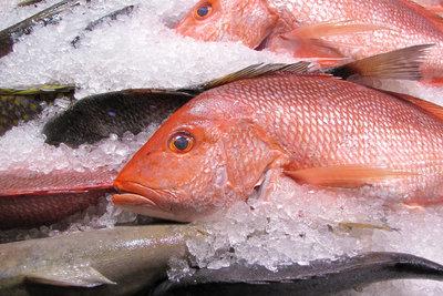 Kein Seefisch bei jodfreier Ernährung