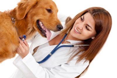 Die Untersuchung vor der Hundeimpfung