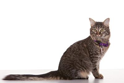 Katzen sind oft scheue Tiere.