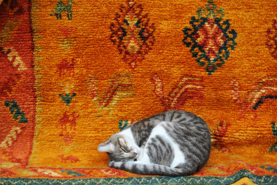 Häufiges Niesen bei Katzen kann verschiedene Ursachen haben.