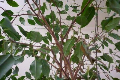 Pflanzen schaffen Gemütlichkeit im Arbeitsumfeld.
